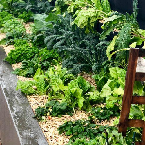 gallery-burcham-garden